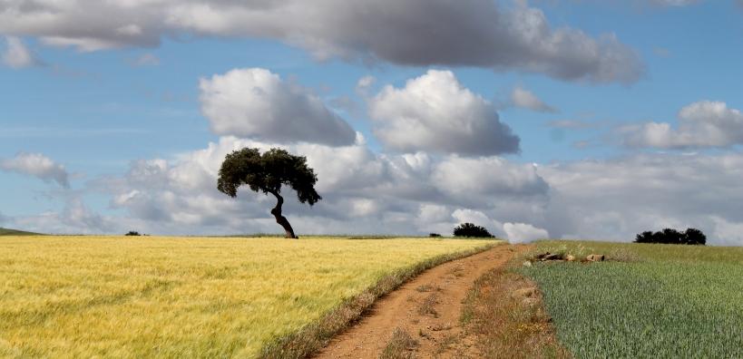 Paraje conocido como Cuesta de Badija, en el término municipal de Castuera (Badajoz) Foto tomada de Blog Ecléctico de Antolo Mágico