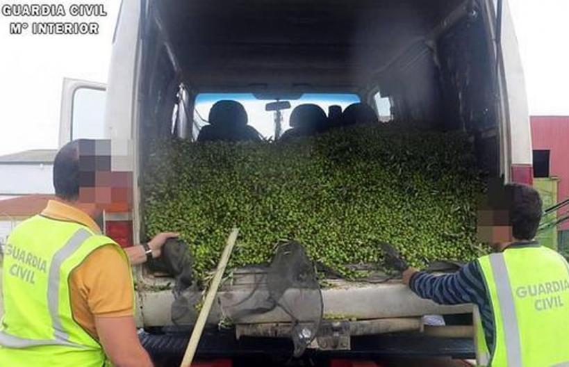 Dos agentes examinan una carga de aceitunas robadas.
