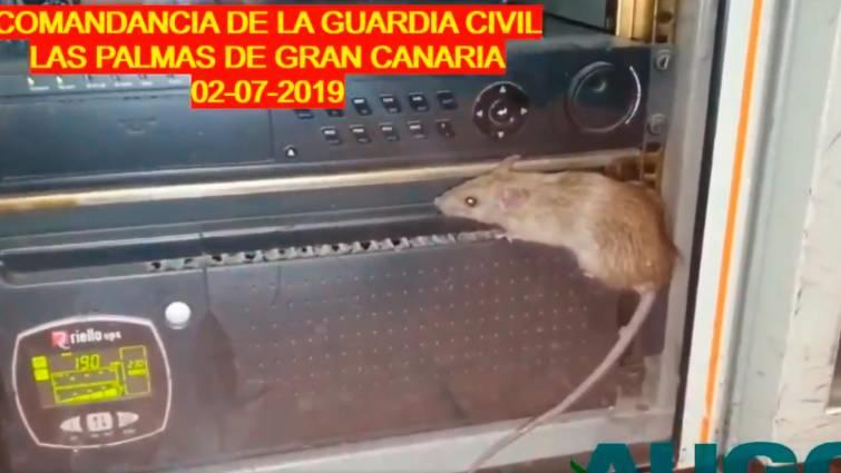 Captura del vídeo donde se ve a un ratón sobre una emisora de radio de la Comandancia de Las Palmas.